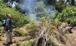 6 Hektare Ladang Ganja Berusia 3 Bulan di Pegunungan Bireun Aceh Dibakar