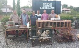 Pelaku Perdagangan Ilegal Puluhan Burung Dilindungi di Maluku Diamankan